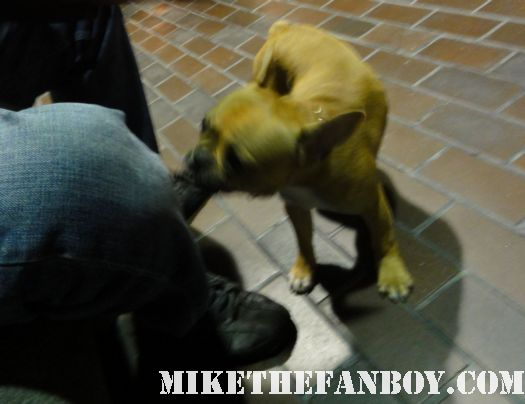 Theo mike sametz french bulldog adorable cute purebred mr. snouts a million