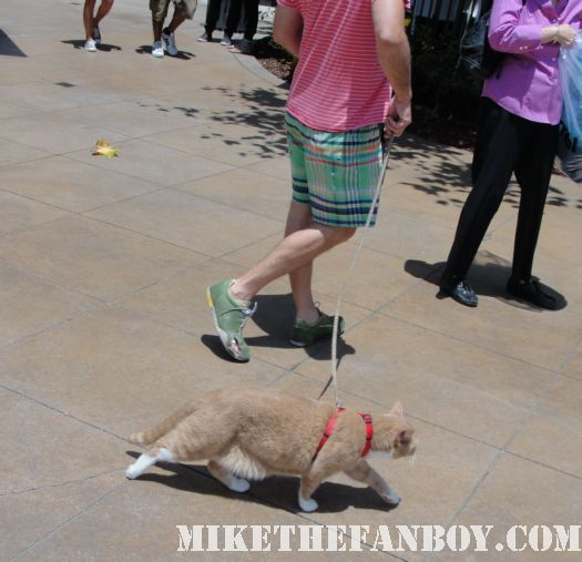 a man walks his cat on a leash at the grove in los angeles rare pussy