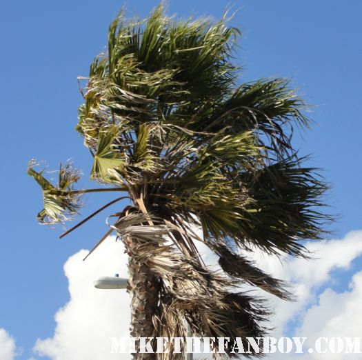 the howling wind blows a palm tree at the 2011 Independent Spirit Awards 2011 the others practical magic