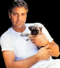 george clooney rare press promo photo still hot sexy with his dog muscle rare abs hot rare photo shoot