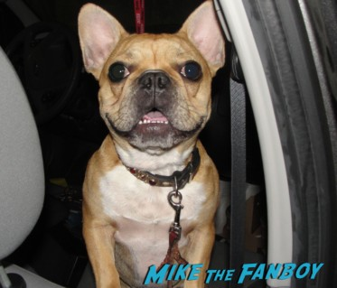 Theo the cutest french bulldog in the entire world waiting to meet matrix star keanu reeves