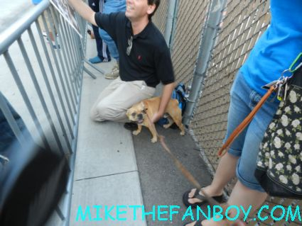 Theo the cute french bulldog waiting for David Duchovny at a talk show taping adorable