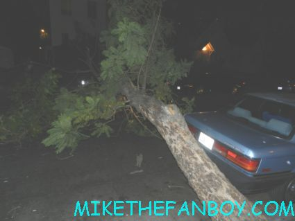 a tree that fell down blocking the street in hollywood rare crashing trees on hollywood side streets