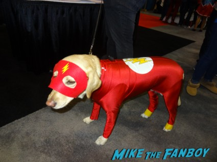 Flash dog at nycc new york comic con 2012 rare promo costumed dogs dog costume prometheus engineer cosplayer at nycc new york comic con rare promo shirtless costumed character gargoyle cosplayers at nycc new york comic con 2012 nycc 2012 Chairface cosplayers at nycc new york comic con 2012 rare promo costumed characters rare promo comic con