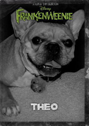 Theo the cutest french bulldog ever done up like Tim Burton's Frankenweenie the new film by disney animated classic
