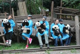 the backstreet boys sing to panda bears in chia rare