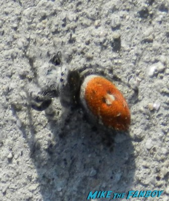 gross hairy black and orange spider
