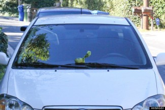 Anne Hathaway and Esmeralda leave a Christmas treat on a paparazzo's car