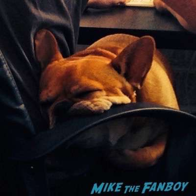 French Bulldog Theo adorable 1