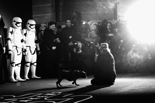 """LONDON, ENGLAND - DECEMBER 16:  Carrie Fisher  attends """"Star Wars: The Force Awakens"""" European Premiere at Leicester Square on December 16, 2015 in London, England.  (Photo by Vittorio Zunino Celotto/Getty Images for Walt Disney)"""