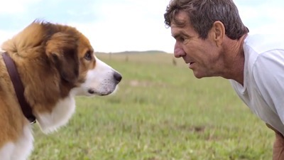 A Dog's Purpose blu-ray contest review 5